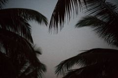 Palm tree background black and white shadow silhouette beautiful leaf coconut on beach nature blur dark branch pattern on day at t Royalty Free Stock Photography