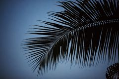 Palm tree background black and white shadow silhouette beautiful leaf coconut on beach nature blur dark branch pattern on day at t Stock Photography