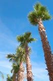 The palm tree Stock Photos