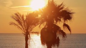 Palm tree on background evening sunset at sea. Landscape leaves palm tree. Palm tree on background evening sunset at sea. Palm tree on ocean shore during evening stock video