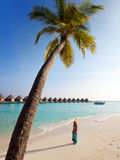 Palm tree on background of ocean, Maldives Stock Photography