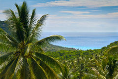 Palm tree on the background of the sea Royalty Free Stock Photography