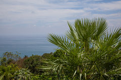 Palm tree on background of the sea. Green palm against the blue sea stock photography