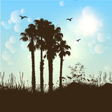 Palm tree background Stock Images