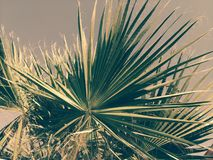 Palm tree on the background of the sky, lit by the sun. Palm tree on the background of the sky. Arrows of leaves ascending skyward, blue sky. Southern country Royalty Free Stock Photography