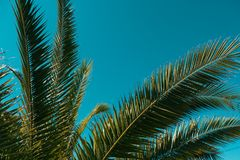Palm tree in the background of the sky. In a hot summer day stock photo