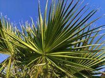 Palm tree on the background of the sky, lit by the sun. Green arrows of leaves ascending skyward, blue sky. Southern country, warm climate, exotic nature, a Stock Photos