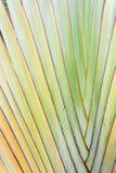 Palm tree Background. Stock Photo
