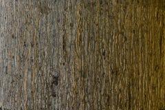 Palm tree. Background texture of tree bark Stock Photo