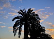 Palm tree backlit at sunrise Royalty Free Stock Photos