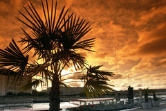 Palm tree and barge on seine river stock photography