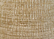 Palm Tree Bark Stock Images