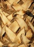 Palm tree bark Stock Images
