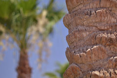 Palm tree bark. Against the background of a palm tree Stock Photo