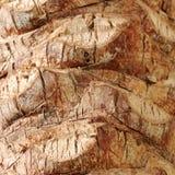 Palm tree bark background Stock Photos