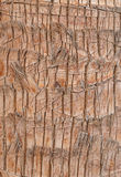 Palm tree bark. Close up of palm tree bark Stock Images