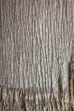 Palm tree bark close up skin draw Stock Photos