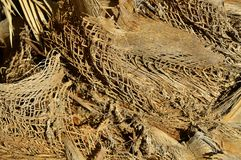 Palm tree bark close-up texture. Royalty Free Stock Photography