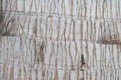 Palm tree bark closeup Stock Photo