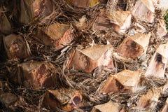 Palm tree bark. Royalty Free Stock Photos