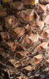 Palm tree bark. Stock Photo
