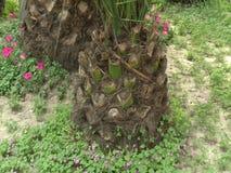 Palm tree bark. Small palm tree bark with flowers around it stock video footage