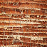 Palm tree bark texture Stock Image