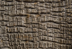 Palm tree bark texture. Natural wooden palm trunk texture. Royalty Free Stock Image