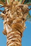 Palm tree bark texture Stock Photography