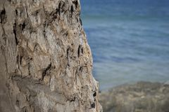 Palm Tree Bark Texture. With ocean in the background Royalty Free Stock Images