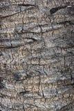 Palm tree bark texture Royalty Free Stock Photos