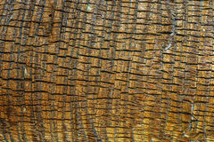 Palm Tree Bark Stock Photo