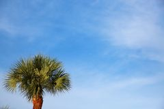 Palm Tree. A palm tree basks in the afternoon Florida sun beneath a partly cloudy sky stock images