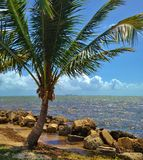 Palm Tree on the beach Royalty Free Stock Images