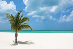 Palm tree on beach. A lone palm tree on a Mexican tropical beach Royalty Free Stock Photography