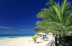 Palm tree and beach. A palm tree on a quiet beach in Barbados Royalty Free Stock Images
