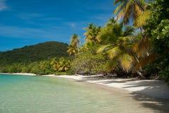Palm Tree beach Stock Photography