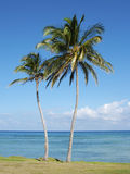 Palm tree and beach Royalty Free Stock Photography