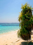 Palm tree on the beach. Tropical paradise in Maldives with palm tree on the beach and turquoise sea Stock Images