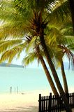 Palm Tree at Beach Royalty Free Stock Photos