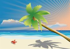 Palm tree and beach Stock Photos