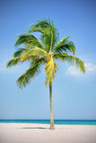 Palm tree at the beach Stock Images