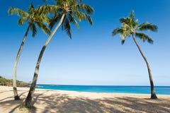 Palm tree beach. Palm tree tropical beach in oahu, hawaii Royalty Free Stock Photo