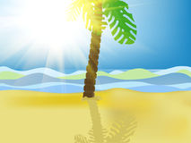 Palm tree on beach Royalty Free Stock Image