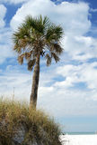 Palm Tree by Beach Royalty Free Stock Photo