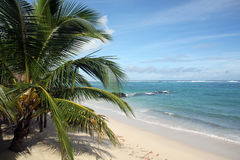 Palm tree and beach Royalty Free Stock Images