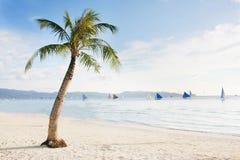 Palm tree on beach Royalty Free Stock Photo