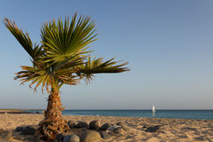 Palm tree on the beach. Of Sal Royalty Free Stock Photo