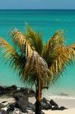 Palm tree on beach. Nice scene of palm tree on beach in Mauritius stock photo