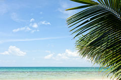Palm tree and beach Stock Photography